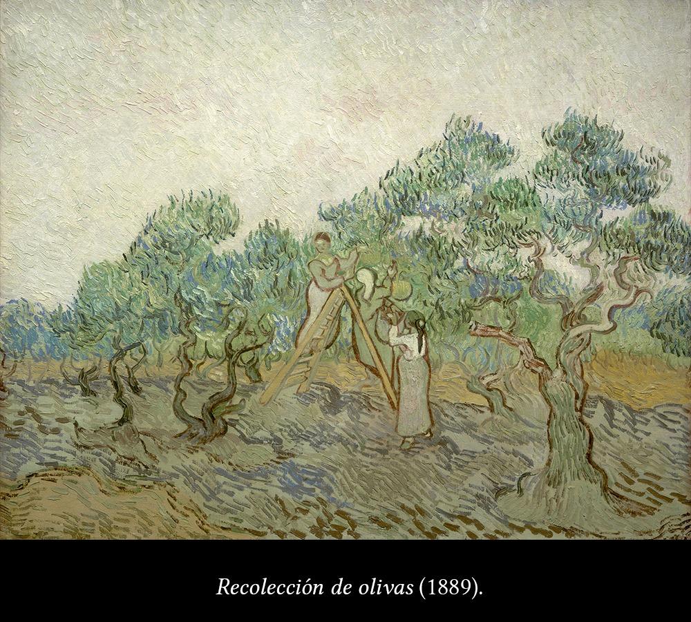 Recolección de olivas de Van Gogh